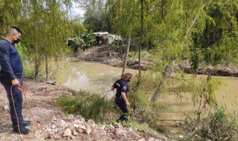 Busca ecología salvar la vida de cocodrilo con varilla en la cabeza