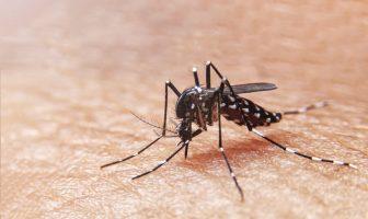 En Jalisco reduce el 93.8% de los casos confirmados de Dengue